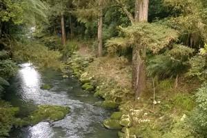 Wasserfall bei Whangarei