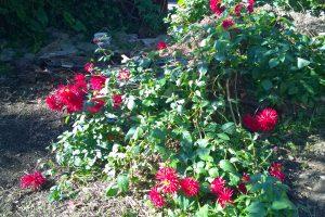 01.05.5015 Komposthaufen im Garten