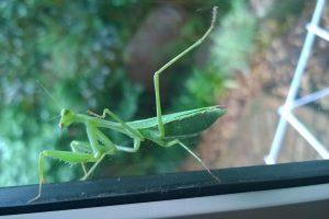 14.07.2015 Besuch am Schlafzimmerfenster