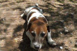 16.11.2015 Duncans Hund Guss
