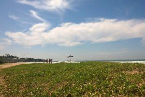 26.11.2015 am Strand von Bentota